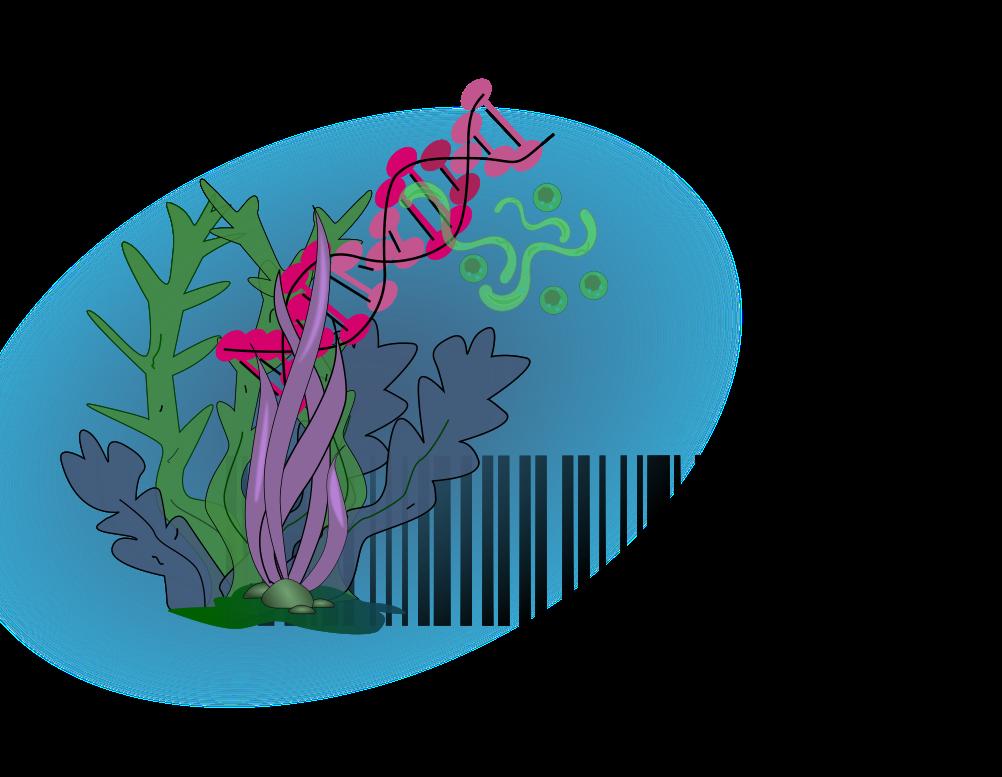 http://www.codif-tn.com/utilisation-de-lidentification-botanique-par-des-codes-barres-adn-pour-les-applications-cosmetiques/