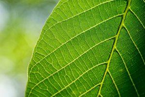 La biodiversité : un enjeu pour le futur