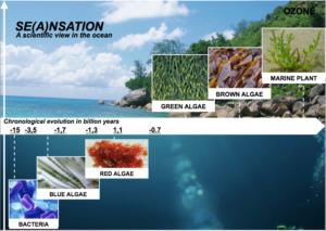 Authenticité et traçabilité chez les algues