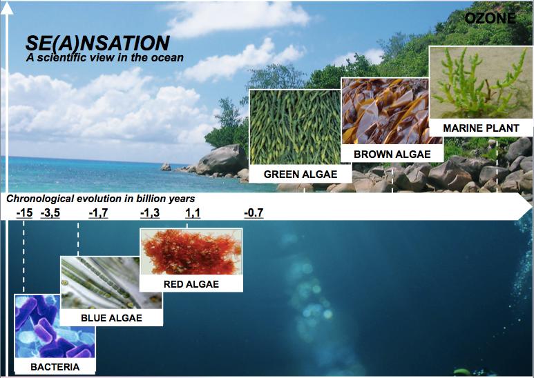 Évolution des algues